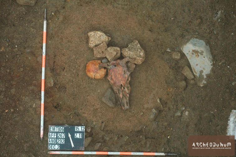 Crâne humain et crâne de vache déposés ensemble