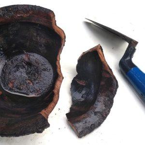 Vue brut de fouille d'une des écuelles en bois découvertes dans les latrines