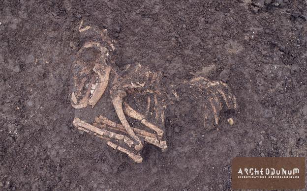 Fig. 5 : Squelette de chien